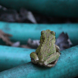 Contemplation by T Mullaly - Animals Amphibians