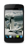 Screenshot of Penguins Free Video Wallpaper