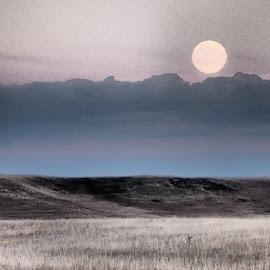 Shine On Harvest Moon by Barbara Olstad - Landscapes Prairies, Meadows & Fields