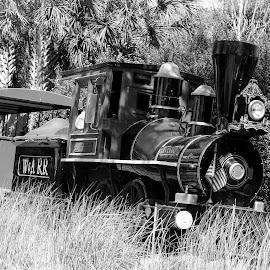 Trem by Wellington Barros - City,  Street & Park  Amusement Parks