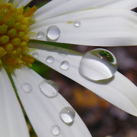 by Kris Pate - Nature Up Close Natural Waterdrops