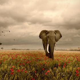 elephantcolorised.jpg