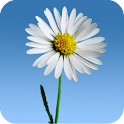Lovely Daisies Live Wallpaper icon