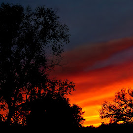 October Eve by Vince Scaglione - Landscapes Sunsets & Sunrises ( eve, silhouette, sunlight, dusk, sky, seasons, autumn, sunset, fall, trees, even, october, landscapes, evening )