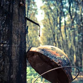 break time by Kiên Lâm - Artistic Objects Other Objects ( cao su, binh duong, rubber tree, man vo, lake, vietnam, zuiko fans photo trip, ho, dau tieng, olympus )