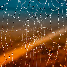 spider web by Željko Jelavić - Novices Only Macro
