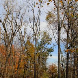 The beginning to the path by Marsha Biller - City,  Street & Park  City Parks ( footbridge, park, autumn, rusted, path, trees, walkway, bridge, woods, iron )