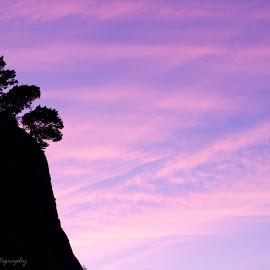 Fading Light by Alyce Bender - Landscapes Mountains & Hills ( oregon, purple, blue, sunset, silhouette, oregon coast, pink )