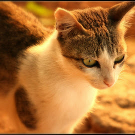 by Supreeth Sathyendra - Animals - Cats Kittens