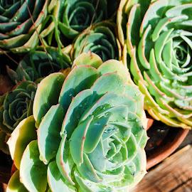 by Matt Meyers - Nature Up Close Gardens & Produce ( vacation, artichoke, san francisco,  )