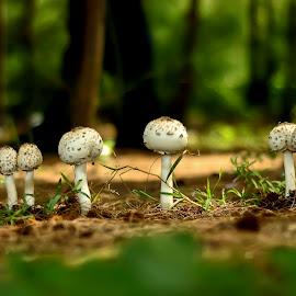 Mushroom by Sandeep Nagar - Nature Up Close Mushrooms & Fungi ( mushroom, wild, nature, fungus, forest, group, mushrooms,  )