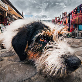 Loneliness by MIhail Syarov - Animals - Dogs Portraits ( lying, lying dog, old town, dog, lonely, close up )