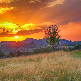 Land of the sun by Marius Turc - Landscapes Prairies, Meadows & Fields