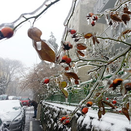ice by Jozef Šolc - News & Events Weather & Storms (  )