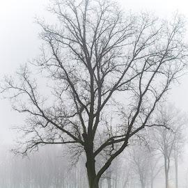 Fog in the park. by Jean Bogdan Dumitru - Novices Only Flowers & Plants