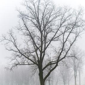 Fog in the park. by Jean Bogdan Dumitru - Novices Only Flowers & Plants (  )