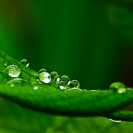 by (GG) Girinath G - Nature Up Close Leaves & Grasses ( nature, dew, drops, wildlife, leaf, nikon, leaves, lens, photography )