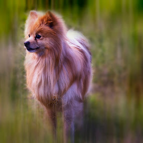 Jules by Cristobal Garciaferro Rubio - Animals - Dogs Portraits