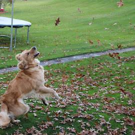 by RichandCheryl Shaffer - Animals - Dogs Playing