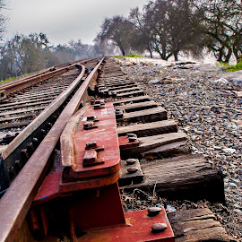 Tracks by Terri Venesio - Transportation Railway Tracks ( sacramento, railroad, track, sacramento river, close up )