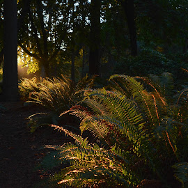 In the BC Rainforest by Keith Boone - Landscapes Forests ( shadow, forest, sunlight, ferns )