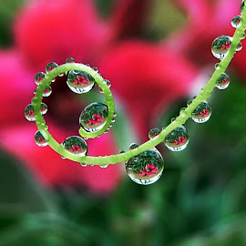 my waterdrops by Suesue Khoo - Nature Up Close Natural Waterdrops