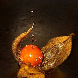 Physalis berry by Ad Spruijt - Nature Up Close Gardens & Produce