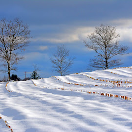 by Jody Rowe - Landscapes Prairies, Meadows & Fields