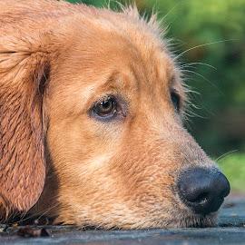 Profile by Sue Matsunaga - Animals - Dogs Portraits