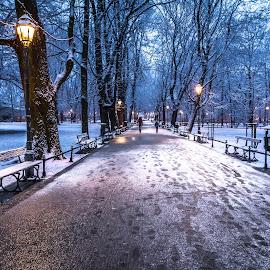 Planty by Wojtek Guzikowski - City,  Street & Park  City Parks ( winter, guzikowski, bench, park, krakow, snow, planty, poland, city, alley )