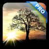 Sun Rise Pro Live Wallpaper