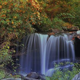 by Cheryl Hudnall Kincaid - Nature Up Close Water
