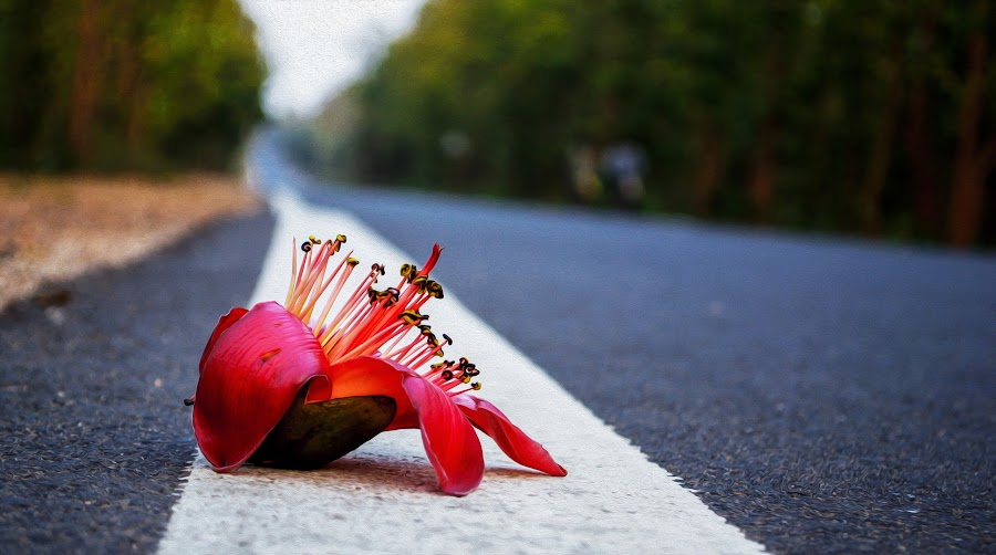 Lonley by Rahul Chakraborty - Flowers Single Flower ( red, road, lonley, alone, flower )