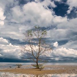 Sendiri by Abu Bakar - Landscapes Beaches