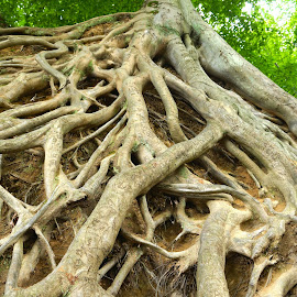 by Erin Howlett - Nature Up Close Trees & Bushes ( tree, roots )