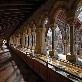 gallery at NHM in Oxford by Almas Bavcic - Buildings & Architecture Other Interior