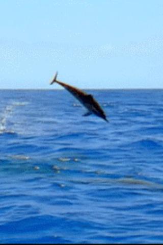 Playful Dolphin Live Wallpaper