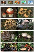 Screenshot of Mushrooming