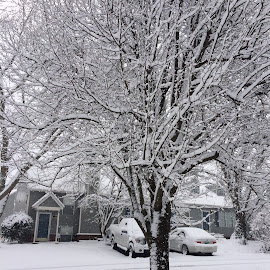 Snowy tree by Brent Hagie - Instagram & Mobile iPhone (  )