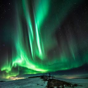 Northern Lights by Ivan Bertusi - Landscapes Travel ( lights, magic, artic, ice, aurora, islanda, dance )