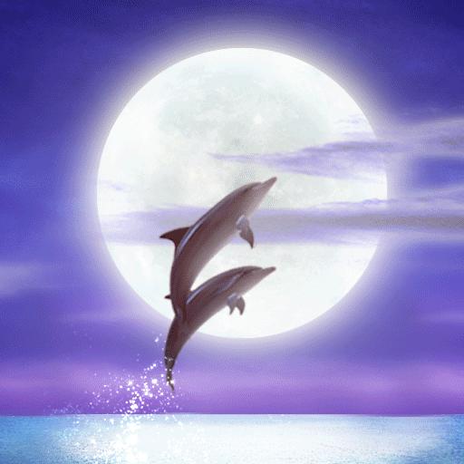 个人化のDolphin★RYUKYU HEALING Free LOGO-記事Game