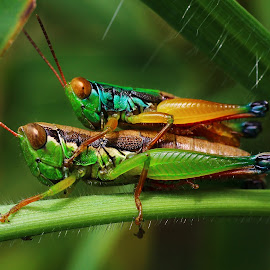 naturals by Jeffrey Haryanto - Animals Insects & Spiders