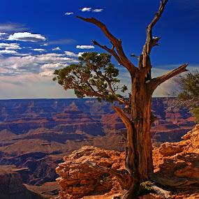 Grand Canyon 02 by Jeff Stallard - Landscapes Deserts ( desert, tree, sunset, twilight, arizona, grand canyon )