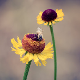 Bee and Bulb by Scott Zinda - Nature Up Close Other plants ( bee, green valley, flower,  )
