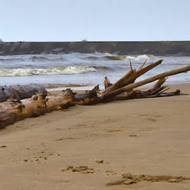 Lakeshore Driftwood by Tim Hall - Landscapes Beaches ( sand, driftwood, waves, great lakes, beach )