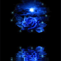 Blue Rose Reflected In Water L icon