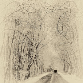 Alone on The Road by Sue Matsunaga - City,  Street & Park  Street Scenes (  )