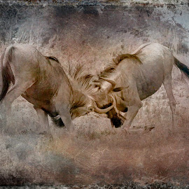 Wildebeest Texture by Gary Want - Digital Art Animals ( okavango delta, botswana, lebala, safari, africa, #wildlife, blue_wildebeest, #locations )