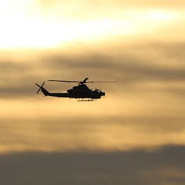 Cobra at Sunset  by Harry  Phillips - Transportation Helicopters (  )