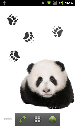 Panda chub live wallpaper
